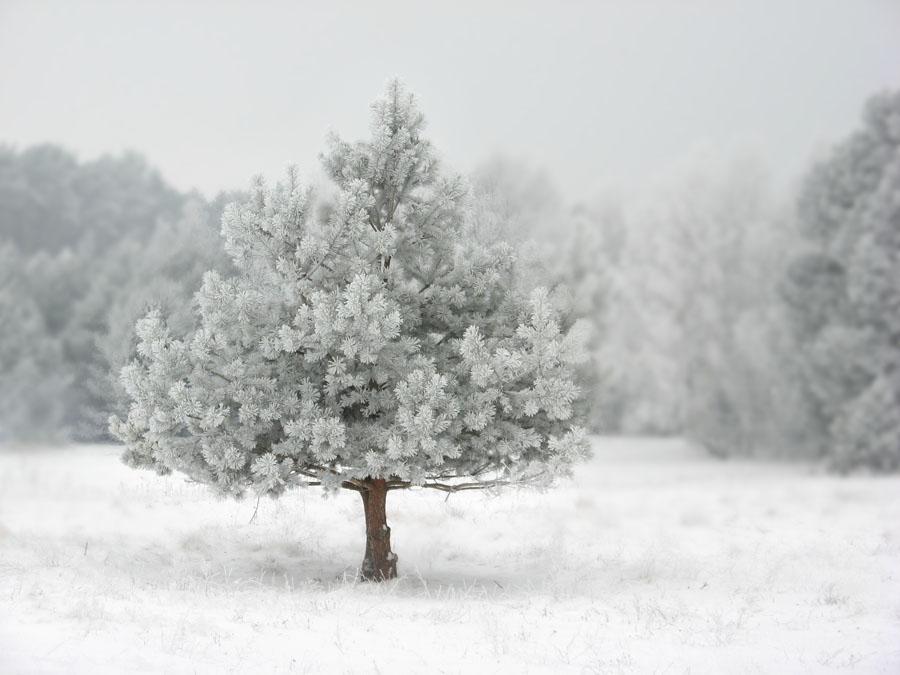 Przyszła zima – jak się nie dać chorobie?
